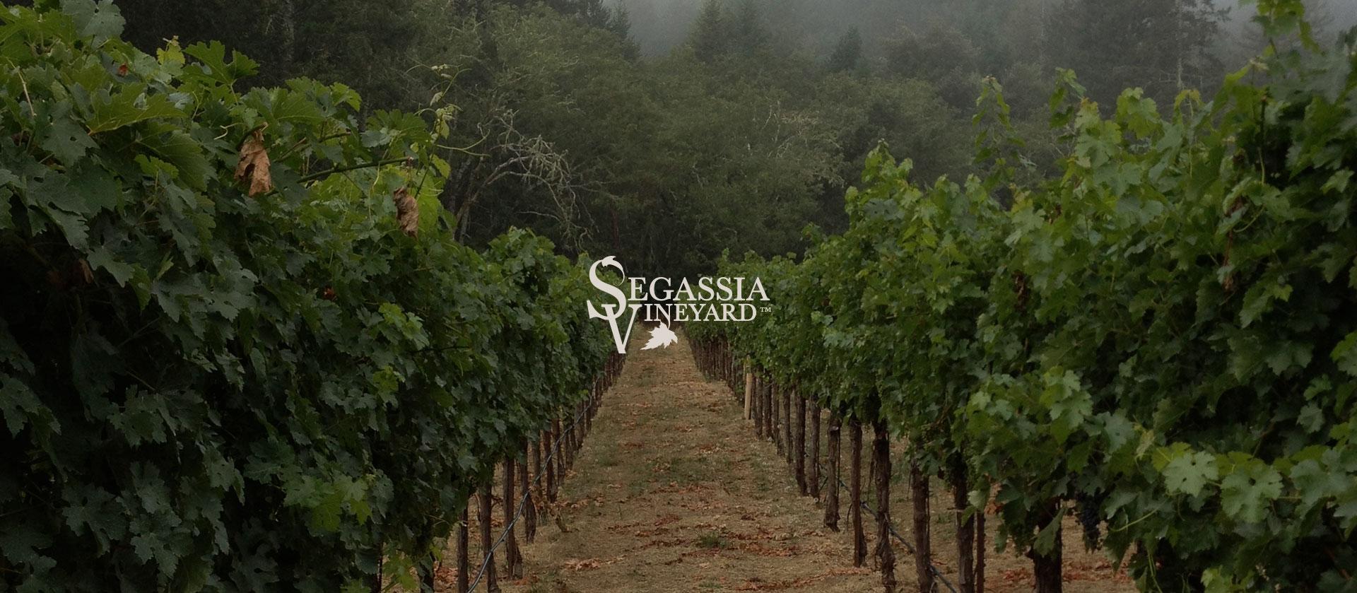 Segassia-Vineyard-Hero